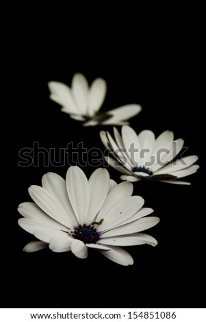 Three flowers and a little worm - stock photo