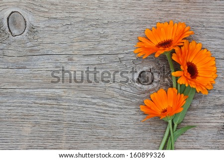Three flowers of a calendula on an old wooden background - stock photo