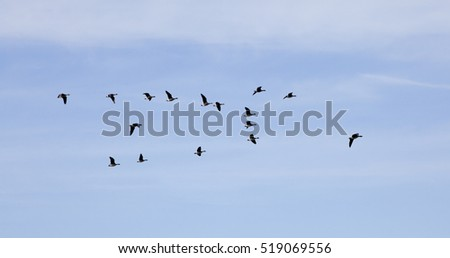 three Flying wild geese in blue sky