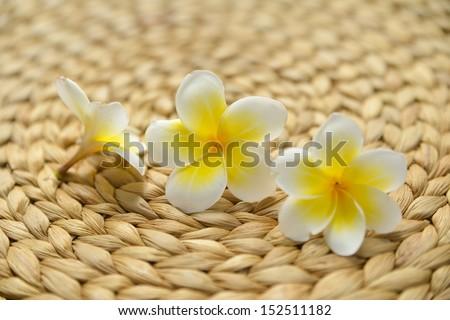 Three frangipani and Wicker placemat - stock photo