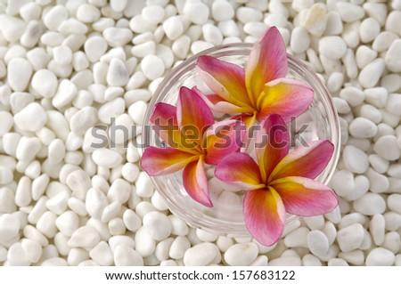 three frangipani flowers in vase and white pebbles - stock photo