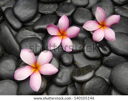 Three frangipani flowers on black pebbles