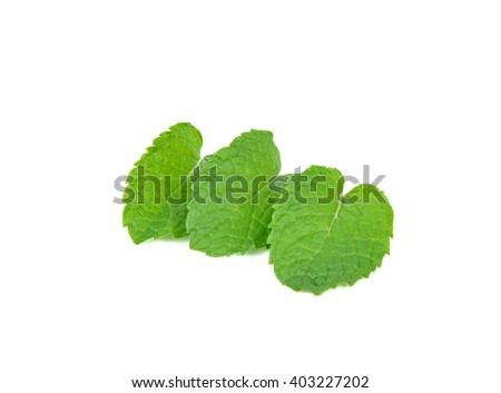 three fresh mint leaves isolated on white background. - stock photo