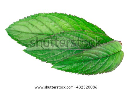 three fresh mint leaves isolated on white background studio macro