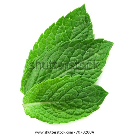 three fresh mint leaves isolated on white background. Studio macro