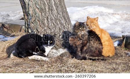 three funny colored cat sitting near a tree - stock photo
