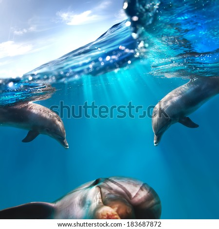 three funny dolphins underwater and water surface and sky above them - stock photo