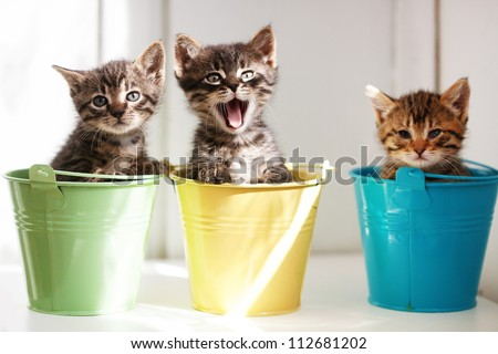 Three funny kittens sitting inside colorful pots - stock photo