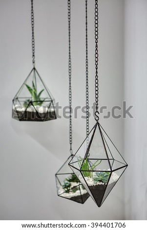 Three glass vases with metallic frames. The vases are hanging on chains on the gray wall background. Inside vases there are plants, ground and pebbles. Focus is on the nearer vase. Close-up photo.  - stock photo