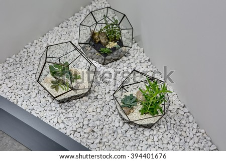 Three glass vases with metallic frames. The vases are standing on the pebbles on the gray wall background. Inside vases there are plants, ground and pebbles. Close-up photo. Horizontal.  - stock photo