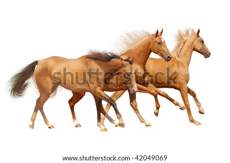 three golden horses on white - stock photo