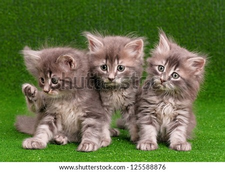 Three gray kittens on artificial green grass - stock photo