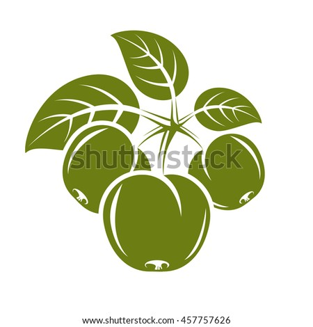 Three green simple apples with leaves, ripe sweet fruit illustration. Healthy and organic food, harvest season symbol.  - stock photo