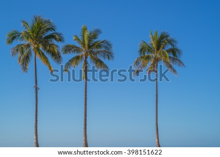 Three Hawaiian Coconut Palm Trees against a blue Waikiki sky backdrop.
