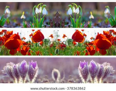 three header site  springtime  flower snowdrop poppy  panoramic - stock photo