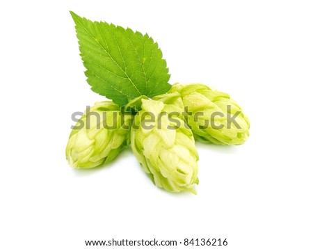 Three hop cone with leaf. Isolated on white. - stock photo