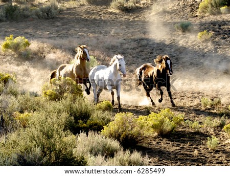 Three horse, Running Wild - stock photo