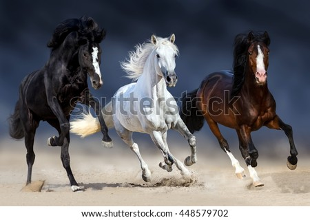 Three horse with long mane run gallop in sand - stock photo