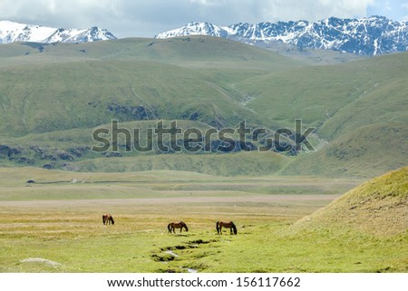 Three horses grazing near stream in mountains, Tien Shan, Kyrgyzstan - stock photo
