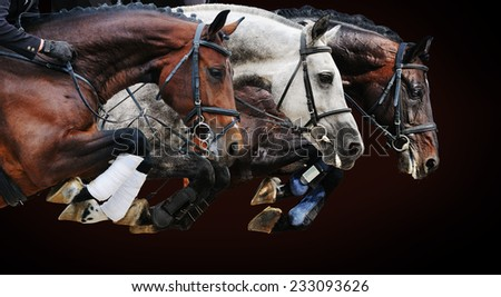 Three horses in jumping show, on brown background with gradient - stock photo
