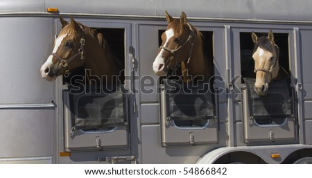 Three Horses Looking Out of a Horse Trailer - stock photo