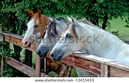 Three horses standing at a fence on a rural farm - stock photo