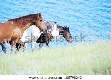 three horses walking along the beach against the backdrop of blue sea - stock photo