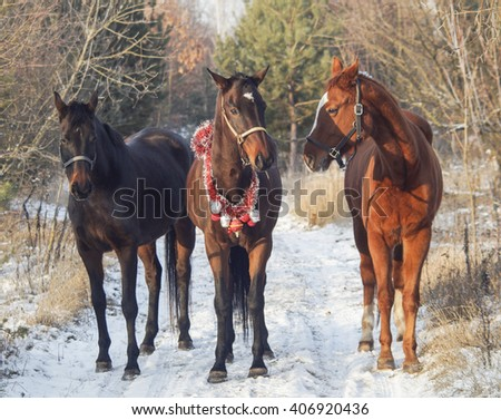 three horses walking on the snow between the trees in the forest