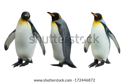 Three imperial penguins on a white background - stock photo