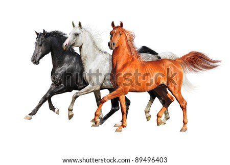 three isolated arabian horses