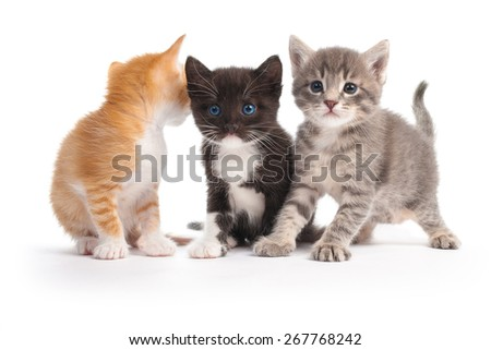 three kittens isolated on white background - stock photo
