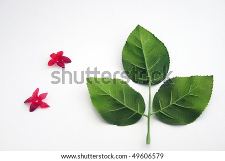 Three leaf with two small red flowers - stock photo