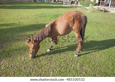 three-legged horse grazing in the pasture
