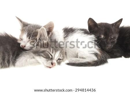 Three little kitten isolated on white background - stock photo