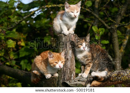 Three little kittens - stock photo