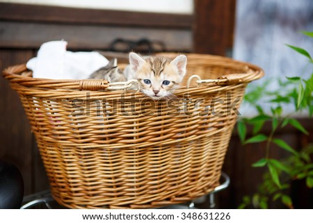 Three little kittens in a basket. Cute beautiful domestic animals. - stock photo