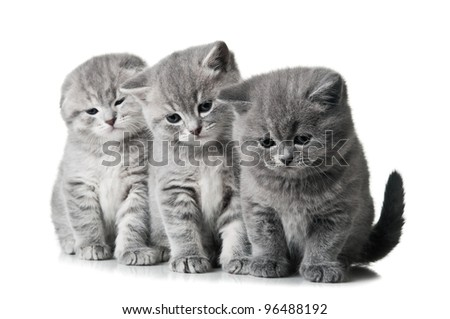 three little kittens isolated on a white background - stock photo