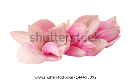 three magnolia flowers isolated on white