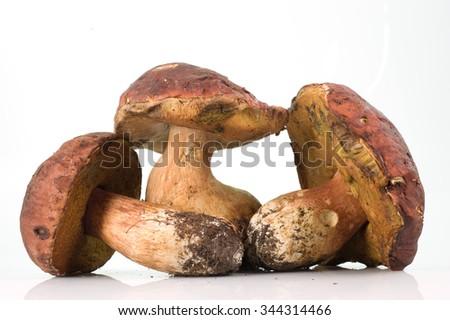 three mushrooms - stock photo