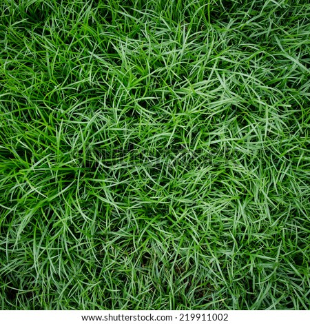 Three natural green grass background for copy space - stock photo