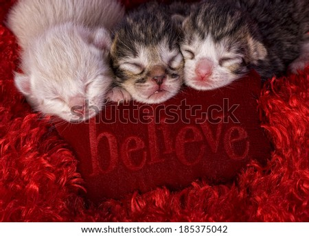 Three newborn kittens on red background on pillow that say's Believe - stock photo