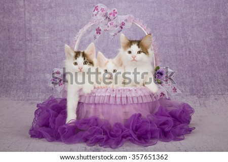 Three Norwegian Forest Cat kittens sitting inside purple tutu decorated basket on light purple background