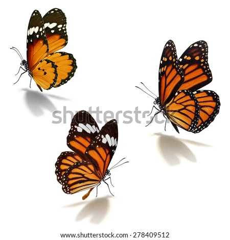 Three orange monarch butterfly isolated on white background - stock photo