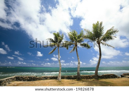 Three palm trees on the edge of the island of Oahu, Hawaii. - stock photo