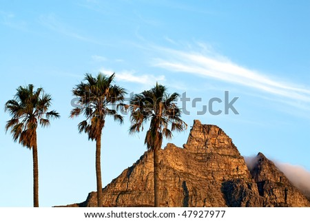 Three palm trees with a side view of Table mountain in the background. - stock photo