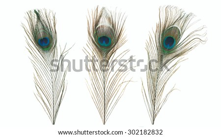 Three Peacock Feather isolated on a white background - stock photo