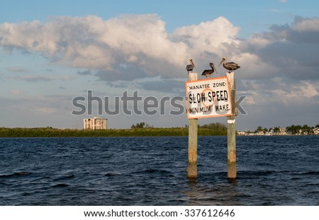 Three pelicans enforcing the speed limit - stock photo