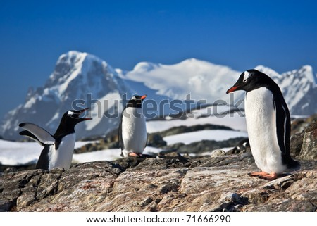 Three penguins dreaming sitting on a rock, mountains in the background