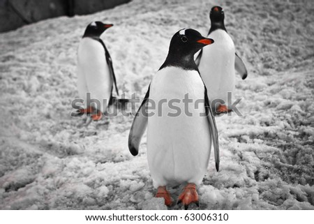 Three penguins standing under the rocks in Antarctica - stock photo
