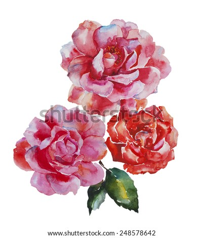 Three pink and red roses flowers original watercolor art isolated on white background - stock photo